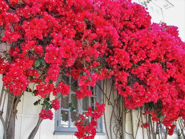 primavera flor 55