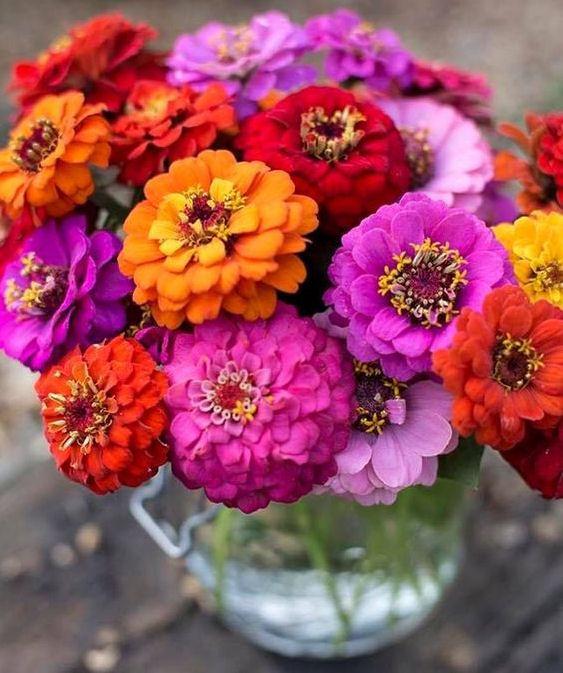 zinia flor 57 2