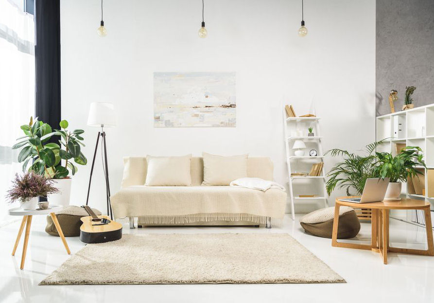 Lirio da paz - Família Araceae
