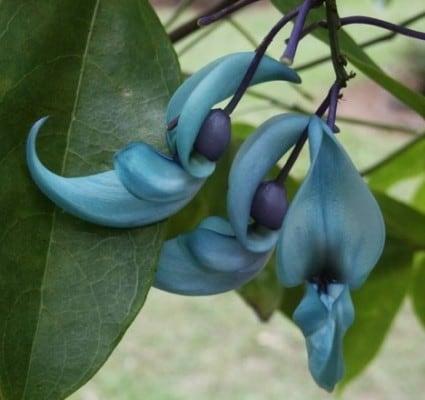 flor de jade 22