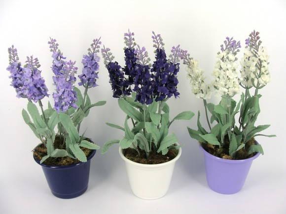 Família Lamiaceae - Alfazemas