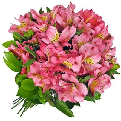 flor astromelia astromélias - Astromélia