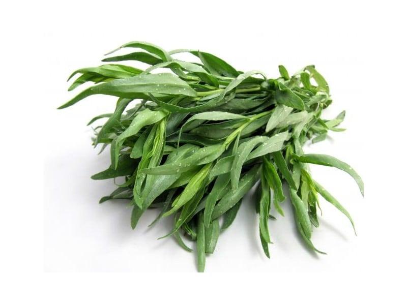 Artemisia Dracunculus Estragão