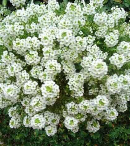 flor-de-mel-56