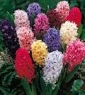jacinto flores f 44