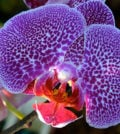 orquidea foto 44