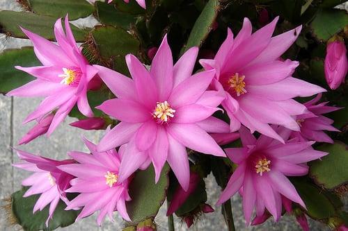 flor outubro f 33