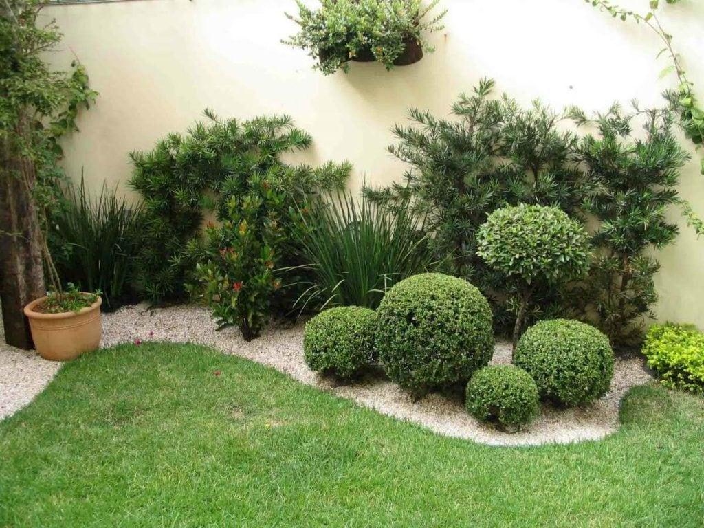 Buxinho – Buxus sempervirens
