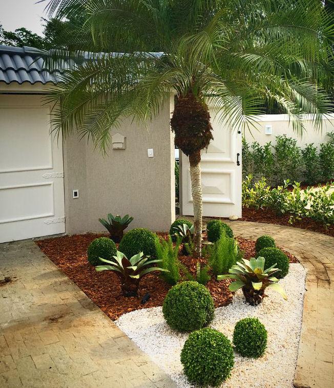 Buxus sempervirens ou buxo - Buxinho
