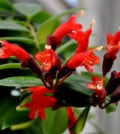 flor bato f 35
