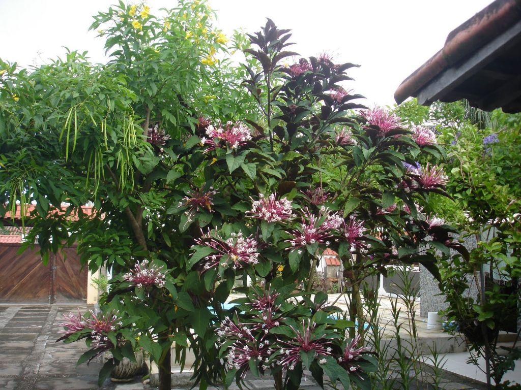 cotonete-flor-68