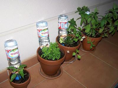 Como regar as plantas