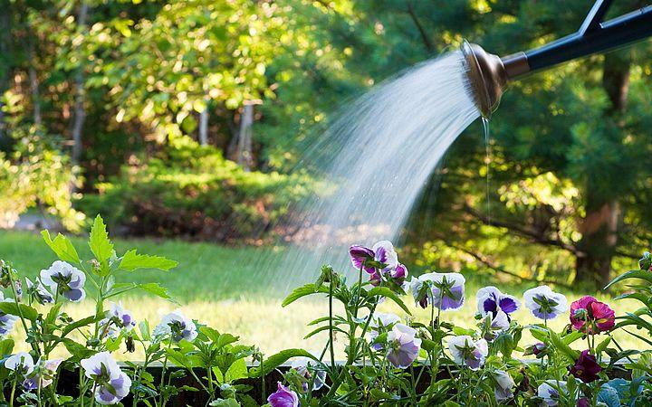 rega-plantas-foto-56