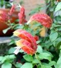 camarao rosa flor 33