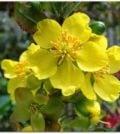 ocna flor 44