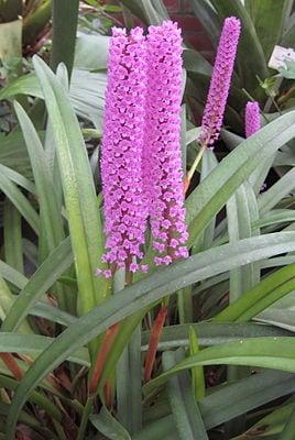 orquidea escova mamadeira foto 77
