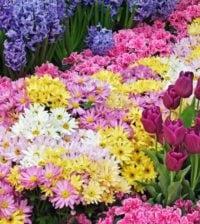 plantar flores foto 55