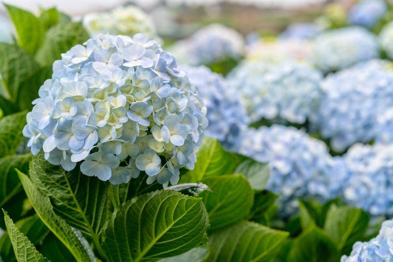 Saiba em que mês deve plantar as suas flores