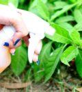 vinagre jardim foto 55