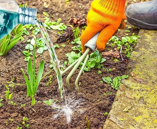 Utilidades do vinagre no seu jardim