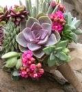 cultivar suculentas 67