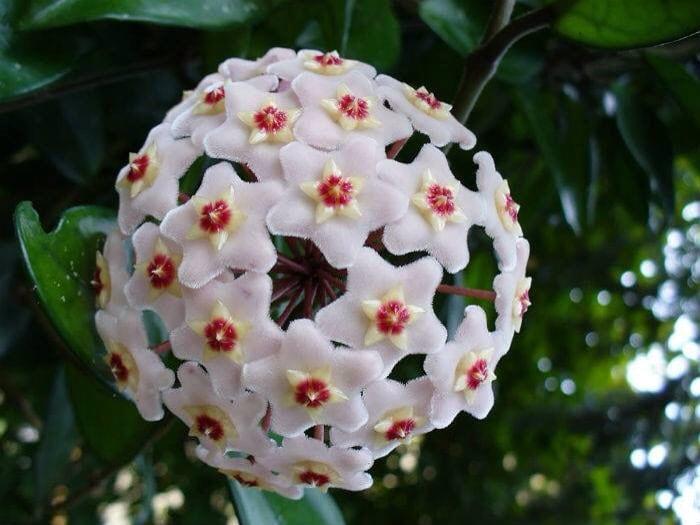 Flores Divertidas