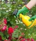 bicarbonato de sodio jardim 33