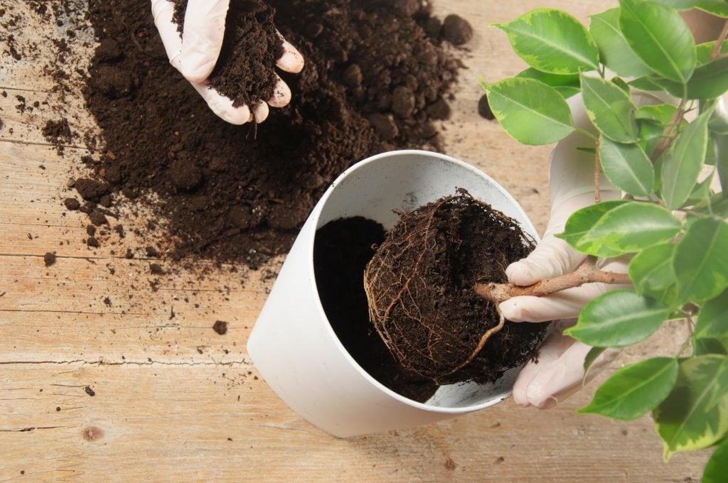 fertilizante natural 66