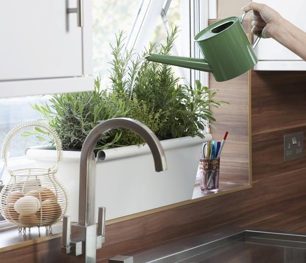 Saiba como recuperar as plantas secas