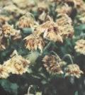 plantas secas foto 89
