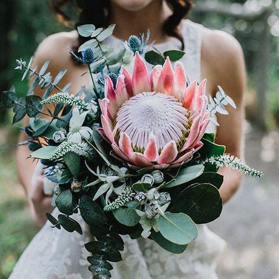 Protea - Flores Mais Bonitas