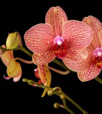 cuidar orquideas blog 55