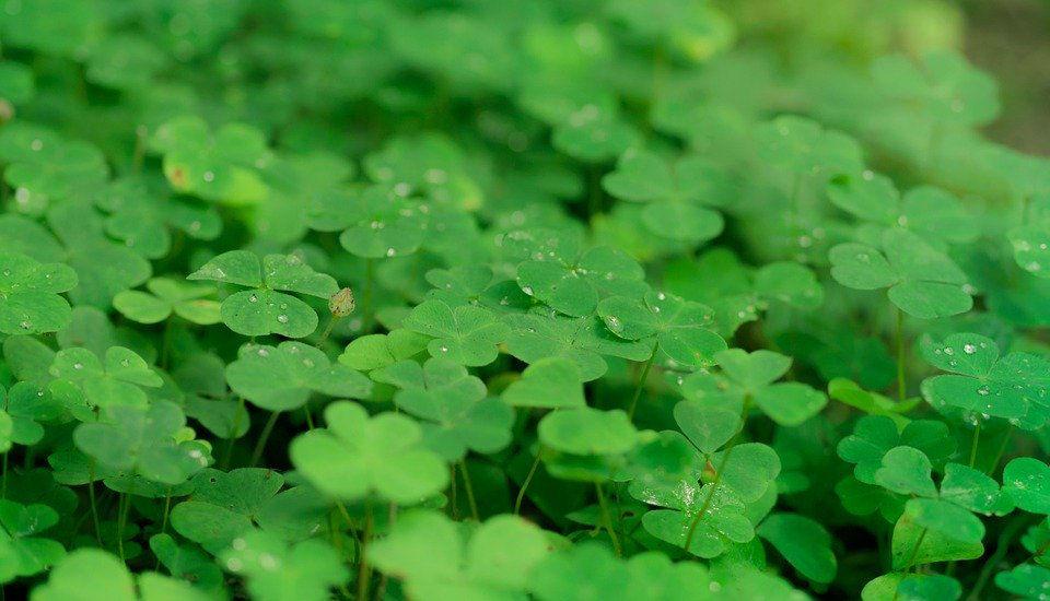 plantas que trazem sorte e boas energias
