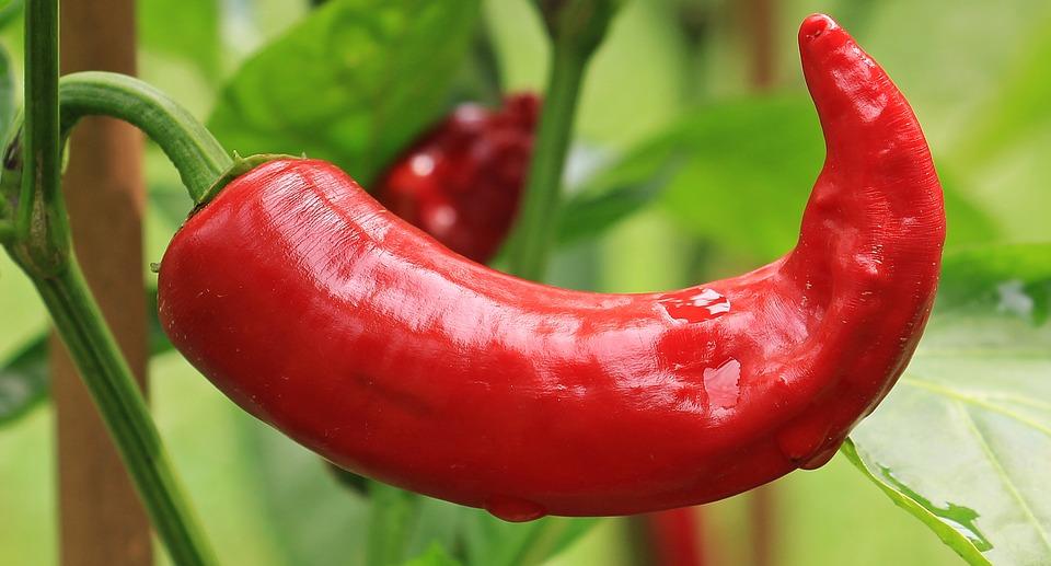 Aprenda a cultivar plantas que trazem sorte e boas energias
