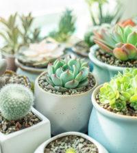plantas vasos ar puro