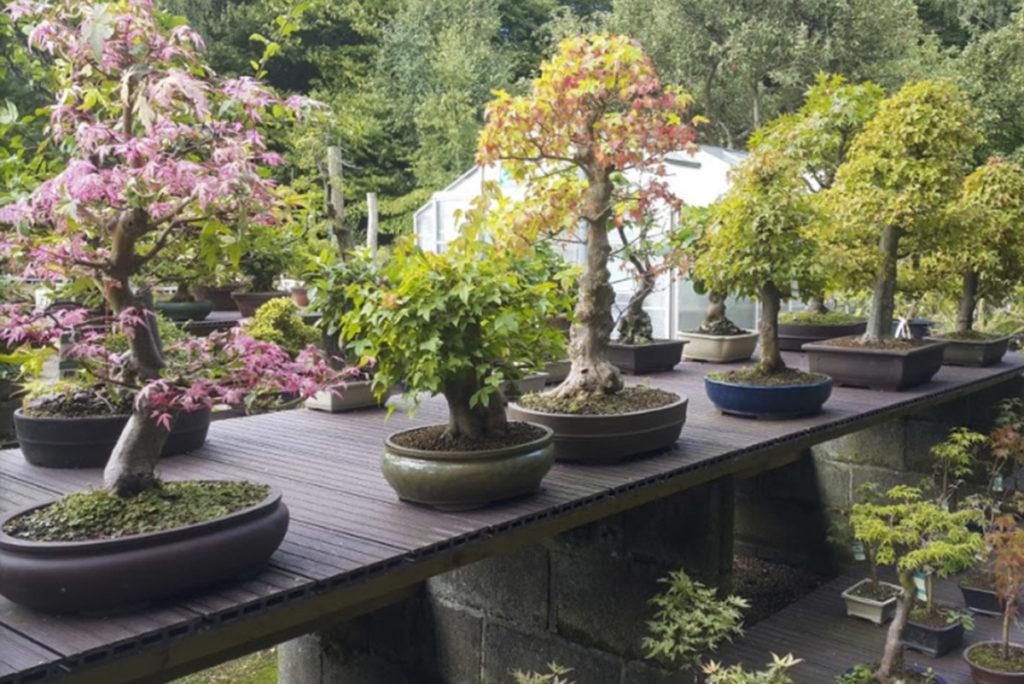 loja bonsai