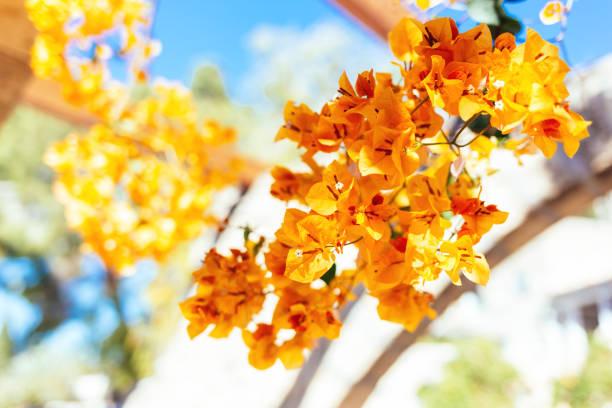 istockphoto 1296484150 612x612 1 - Primaveras