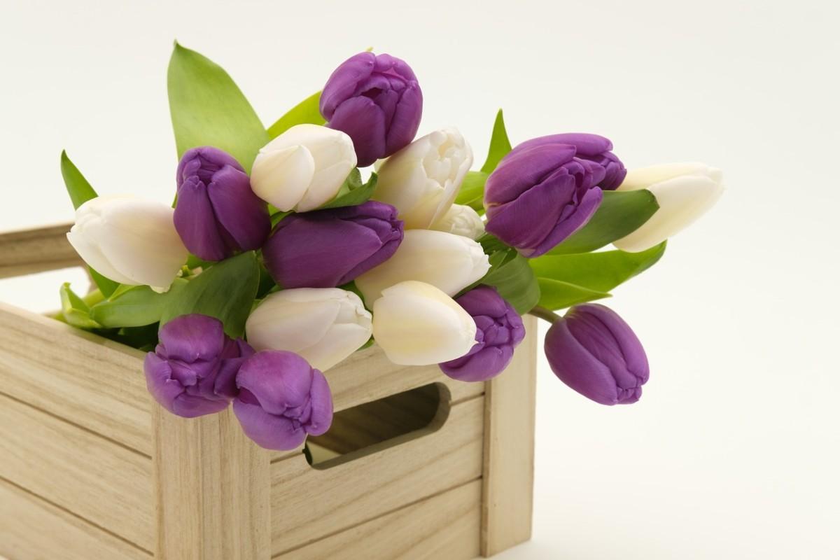 Flores Mais Bonitas